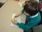 Pupil choping an Apple